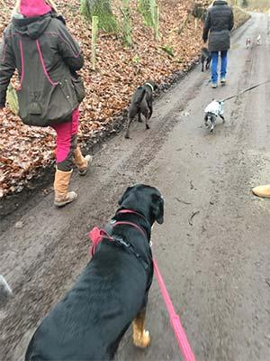 Tierphysiotherapeutischer Spaziergang mit Hundehaltern