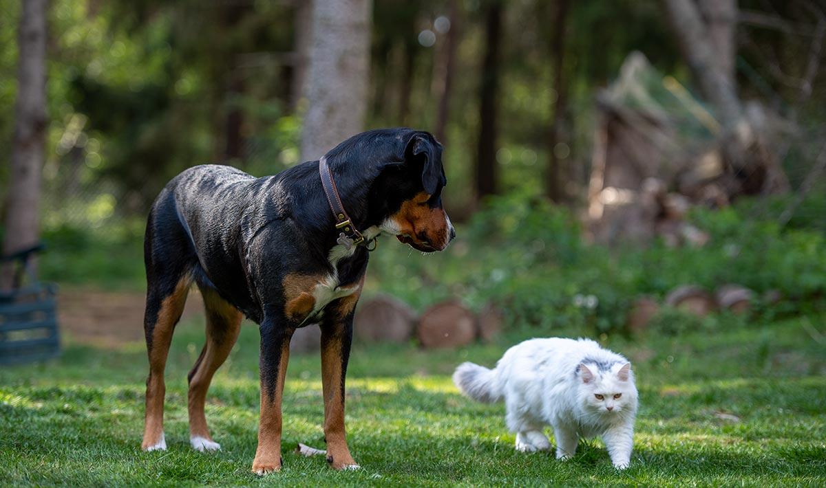 Tierphysiotherapie, Hund mit Katze im Wald