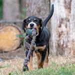 Tierphysiotherapie, Junger Hund mit Spielzeug