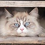 Foto einer Katze, die zwischen Paletten liegt