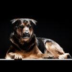 Schöner Hund vor schwarzem Hintergrund