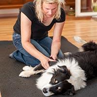 Manuelle Therapie am rechten Ellenbogen des Hundes